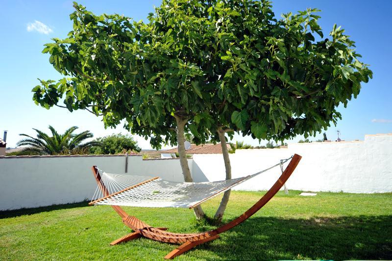 hammock in the back garden under the fig tree