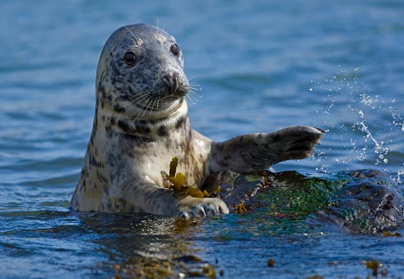 There are also plenty of seals around the island all year round