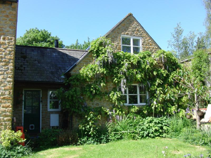 The cottage, with wisteria - a vision in May.