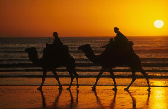 Camel Riding available at our agency
