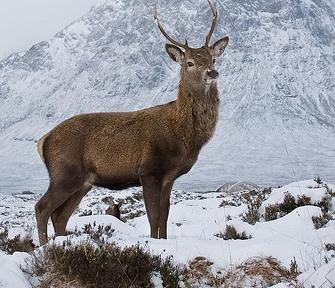 In Glencoe, by top photorapher, guest Billy Currie
