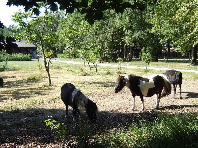Poneys (a 1 km da casa)