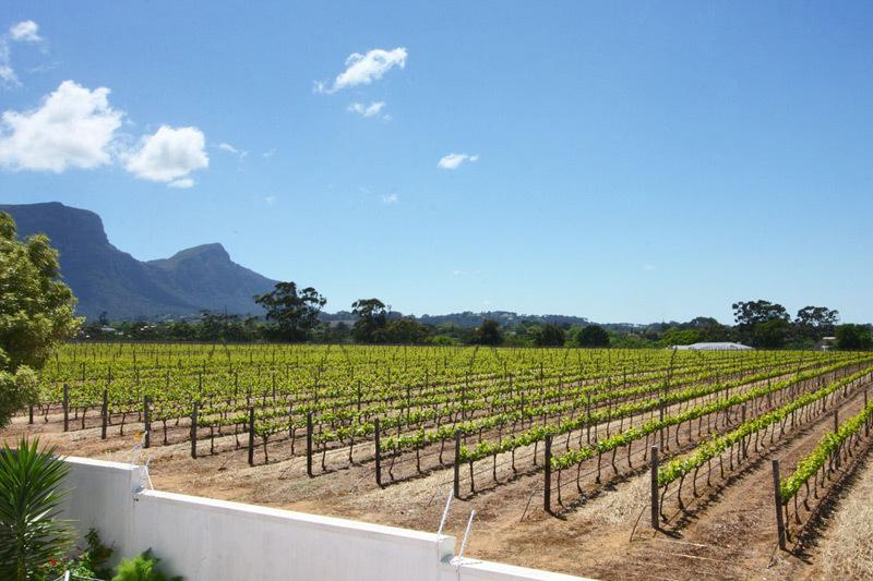 Groot Constantia Vineyards View from Balcony