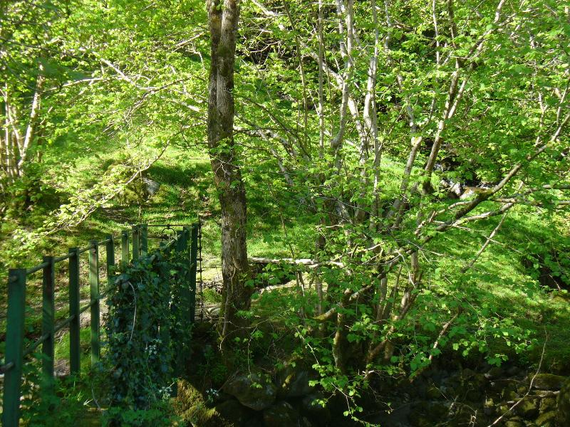 Bridge at end of garden to takes you over river  through woods and circular walk to village