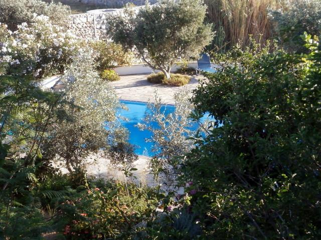 Olive groves surround our stunning pool