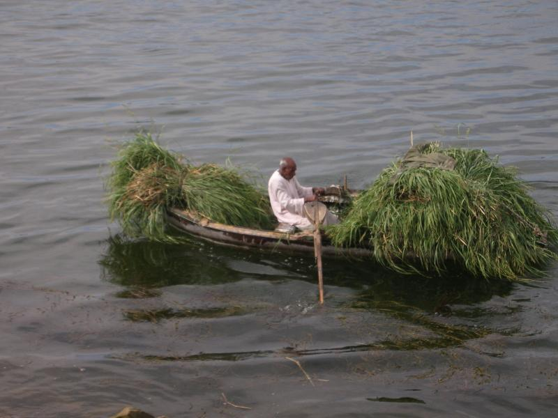 A working day on the Nile