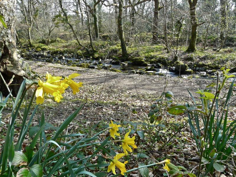 Spring river walk
