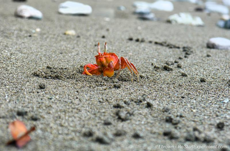 Little crab on the secluded beach at Cabinas Ola Mar