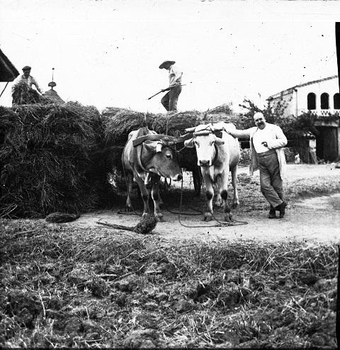 Antiguos ganaderos batiendo la paja, siglo XIX