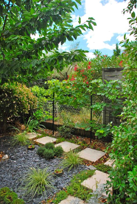 The back garden with the cherry tree and the grapevine treillis with dessert grappe in august