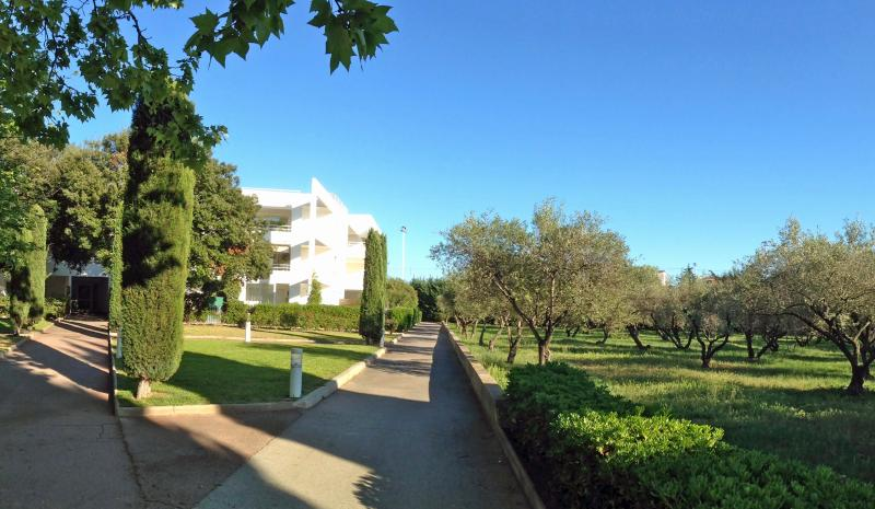 The housing estate, the park and the olive grove