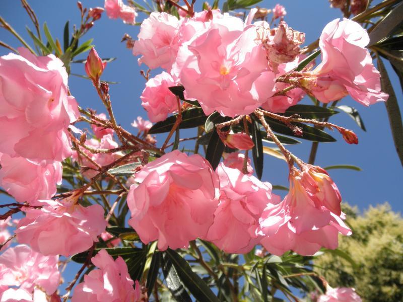 Las flores en Casa Oasis
