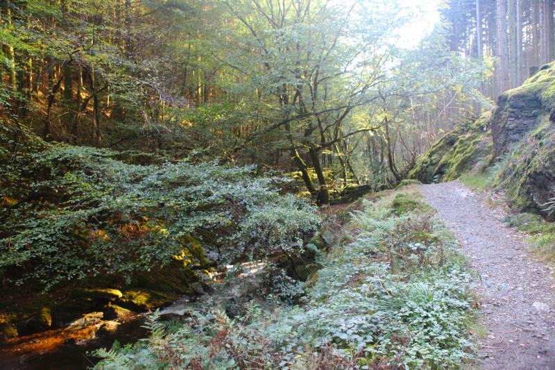 The Hafod forest estate with it's beautiful trails and gardens is on the doorstep of the villag