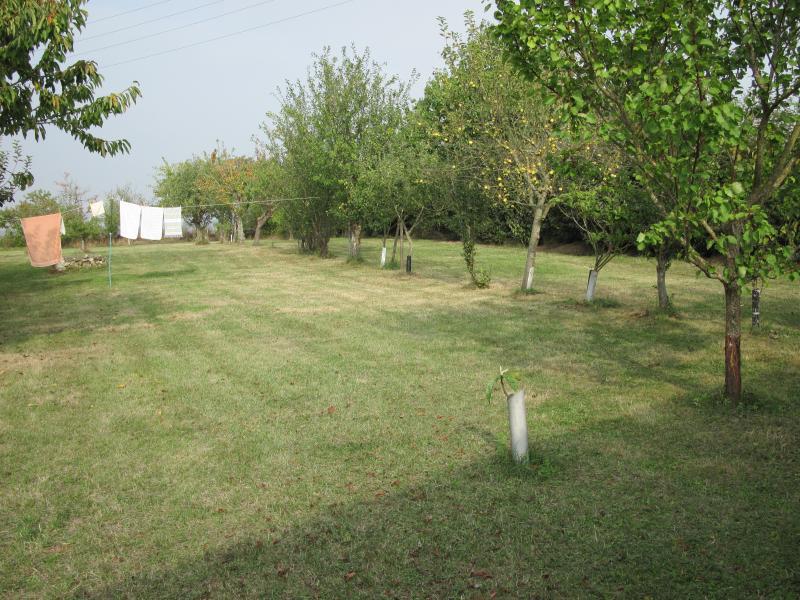 Côté jardin menant à des arbres fruitiers et gazonnée entoure.