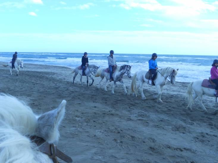 horseback riding at Le Ranch Phare nearby in the Camargue
