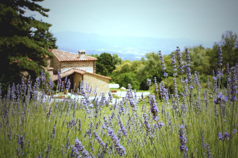 Our lovely farmhouse with the summer lavender and fantastic views. A truly relaxing retreat.