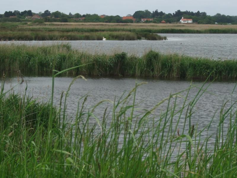 Nature reserve at Titchwell