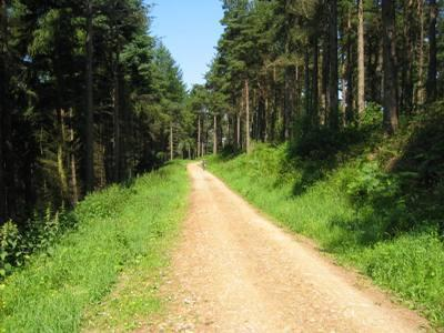 Dalby Forest Cycle Path