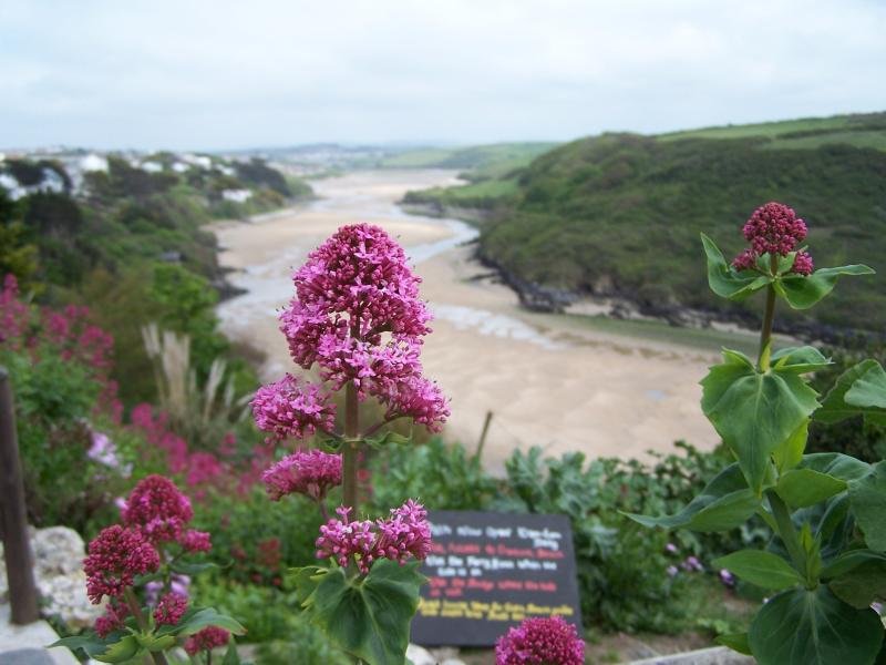 The view of Crantock from a Tea room