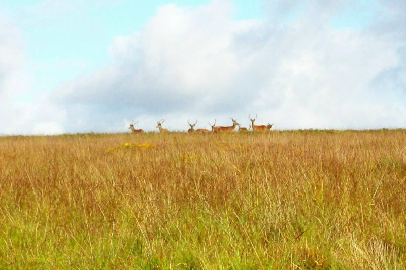 Red Deer Stags on nearby Exmoor
