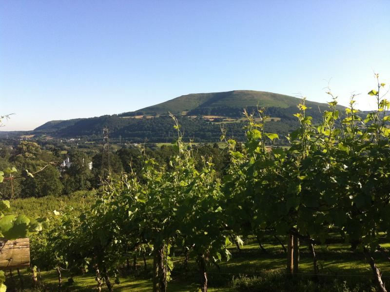 Walk amongst the vines and enjoy glorious views of the Usk Valley