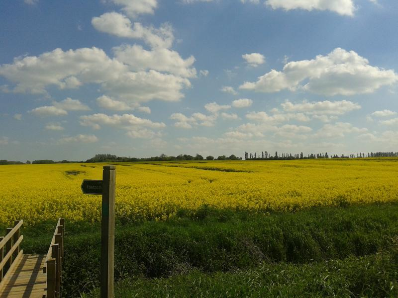The view over a nearby field.  Fancy a walk?