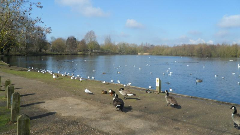 Needham lake approx a ten minute drive. Ideal for fishing, picnics or simply a relaxing stroll
