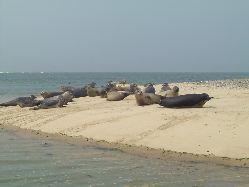 Seals viewed during a boat trip.