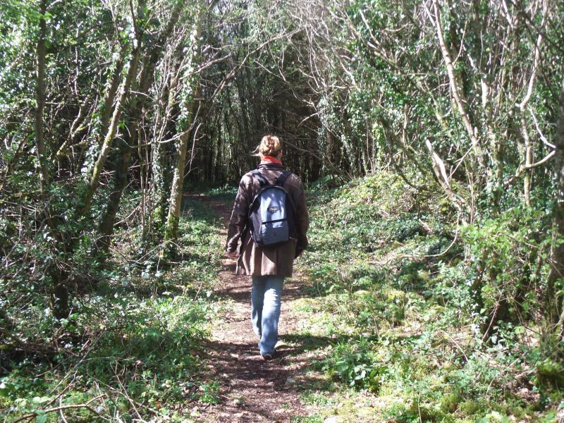Pace e tranquillità a piedi attraverso Cominchas Forrest a piedi in autunno.