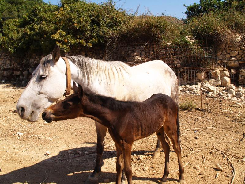 Horseshoe Cottage Mare and Foal