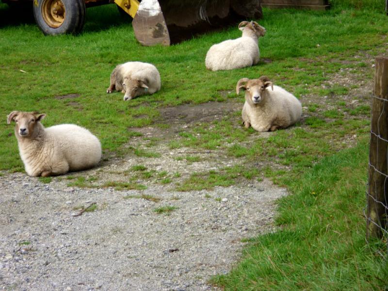 Friendly neighbours.