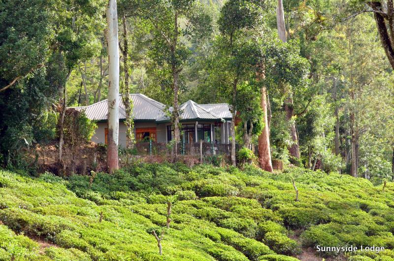 Our home on the range, surrounded by a tea plantation
