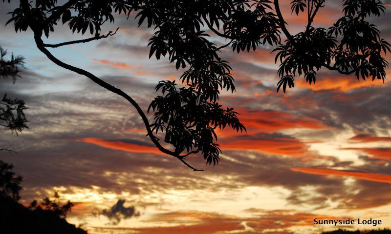 Disfrutar el horizonte cambiante en Sunnyside