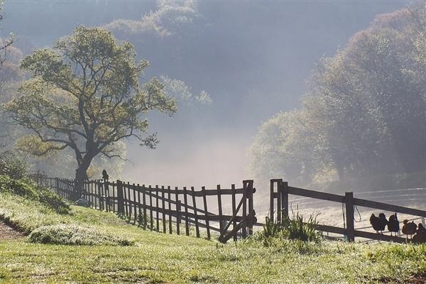 Brume matinale sur le pré à Hamptonne.