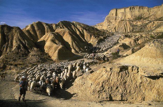 Cañada Real in der Wüste 'Bardenas'