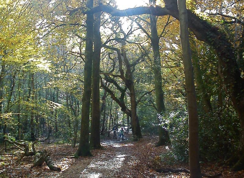 Outono a pé da propriedade através de bosques e campos para a aldeia de Everton com loja e pub.