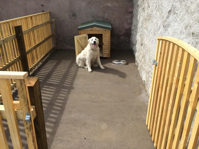 Spacious, secure dog enclosure with Kennel