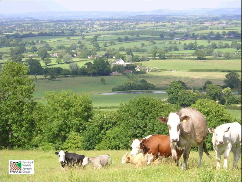 Enjoy glorious views of the Blackmore Vale from our 350 acre farm