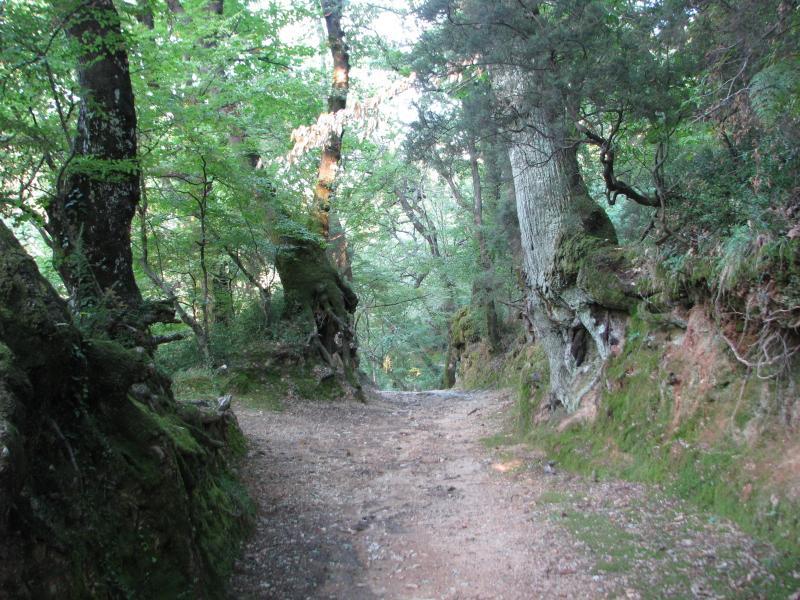 nearest Savina Forest