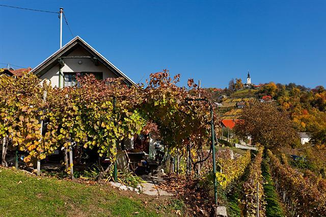 Vineyard cottage - Zidanica Vercek, holiday rental in Straza