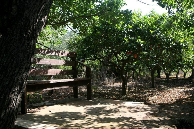 Giardino coltivato ad arance-limoni-mandarini a disposzioni degli ospiti