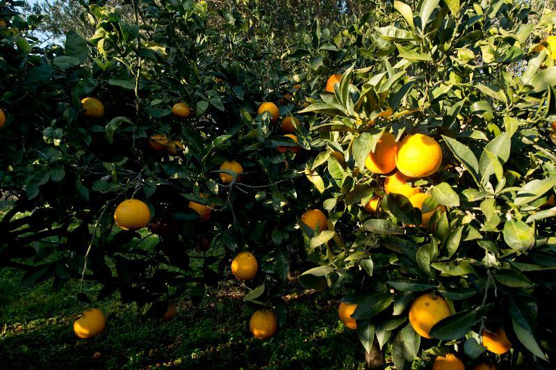 Giardino agrumeto bio a disposizioni degli ospiti
