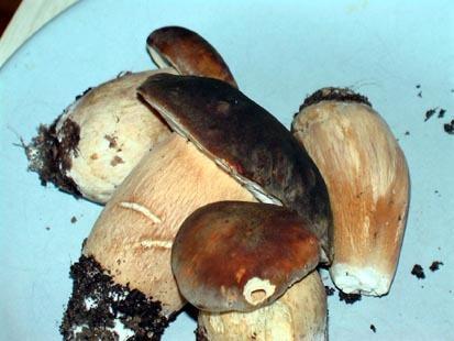 funghi raccolti davanti casa