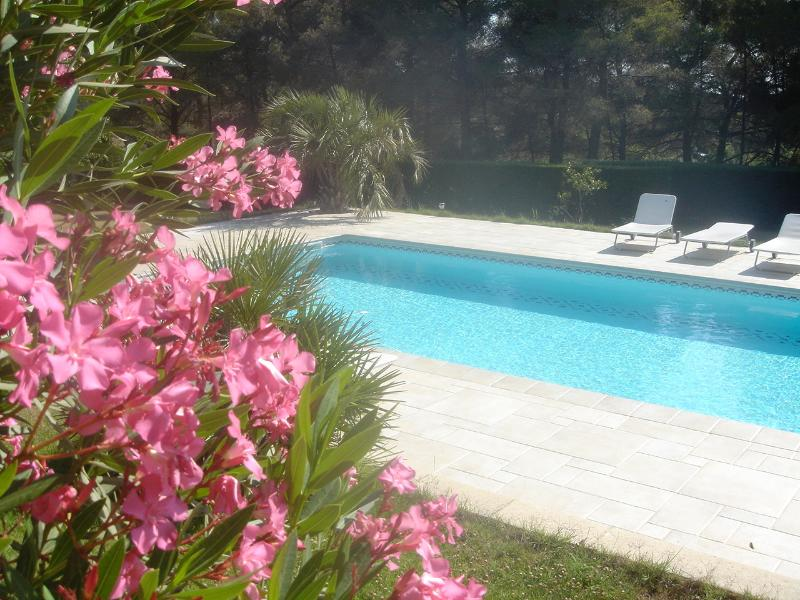Partout dans le jardin d'Agarrus, des lauriers roses, des oliviers...