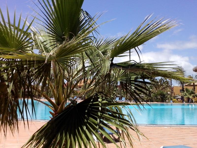 pools surrounded by tropical vegetation / Pools surounded by tropical vegetation