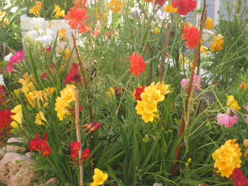 Flowers flourish in Tala village.