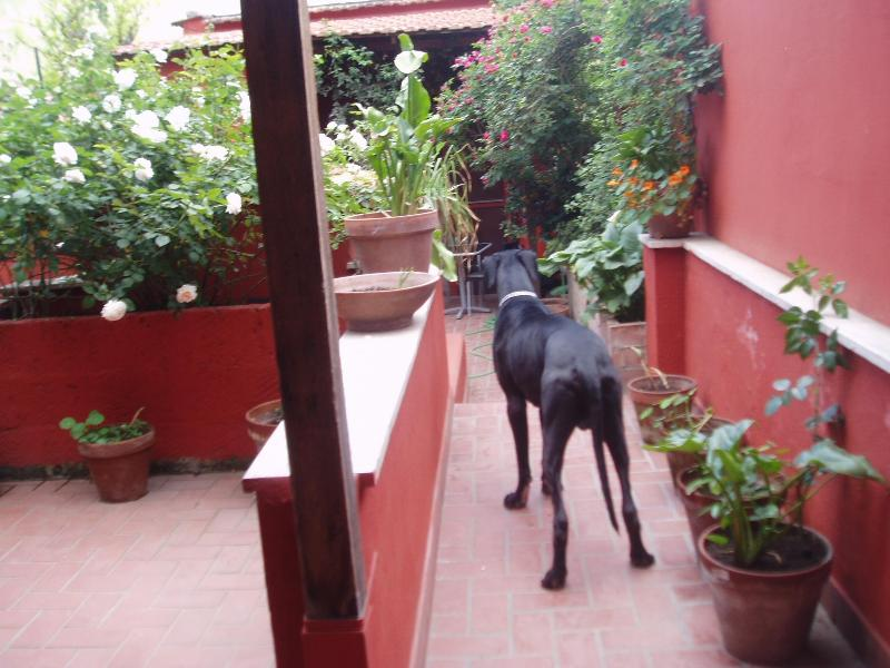 entering the property (the great dane is not still there!!!)