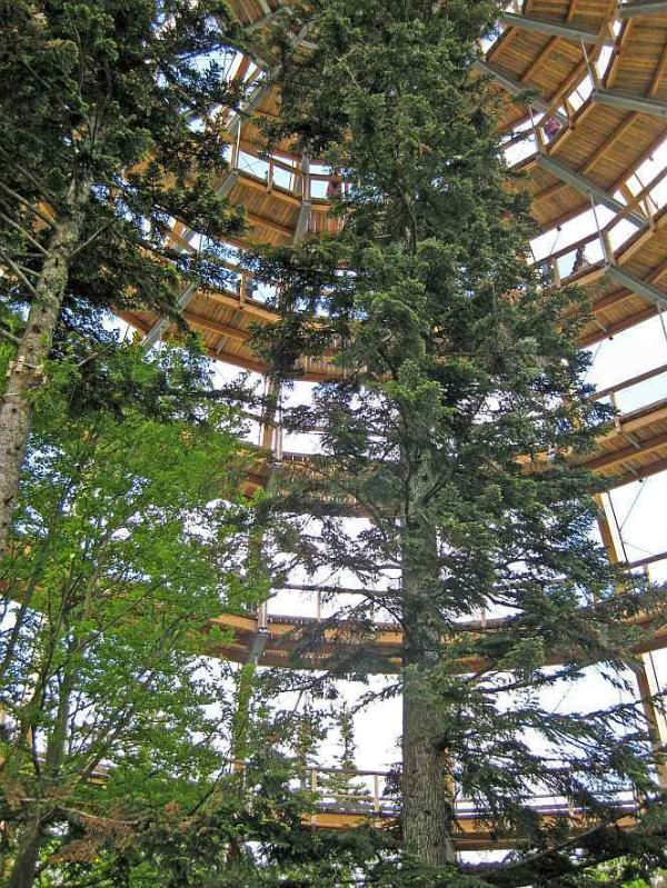 Famous tree top walk in Neuschoenau
