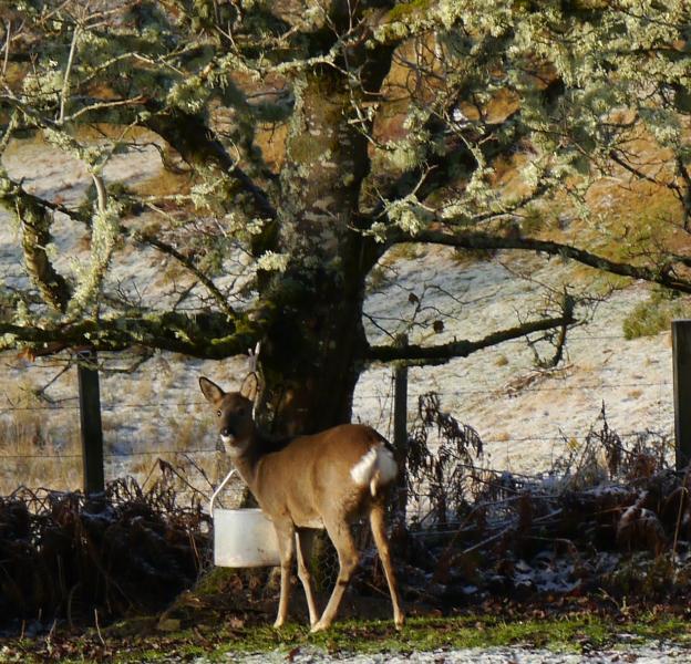 deer feeding near cottage