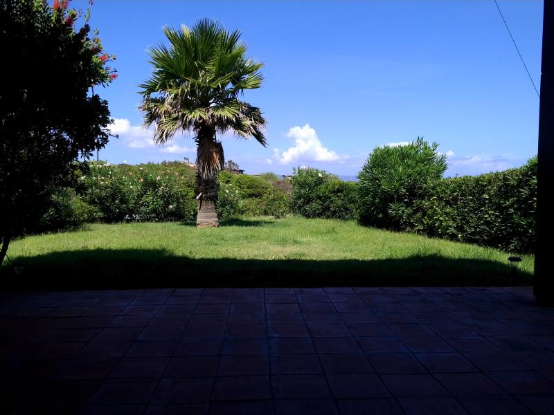 front garden facing the sea with palm tree